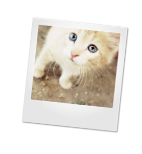 kitten_frame